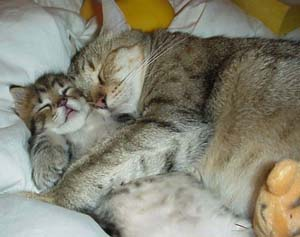 sleeping kittens image